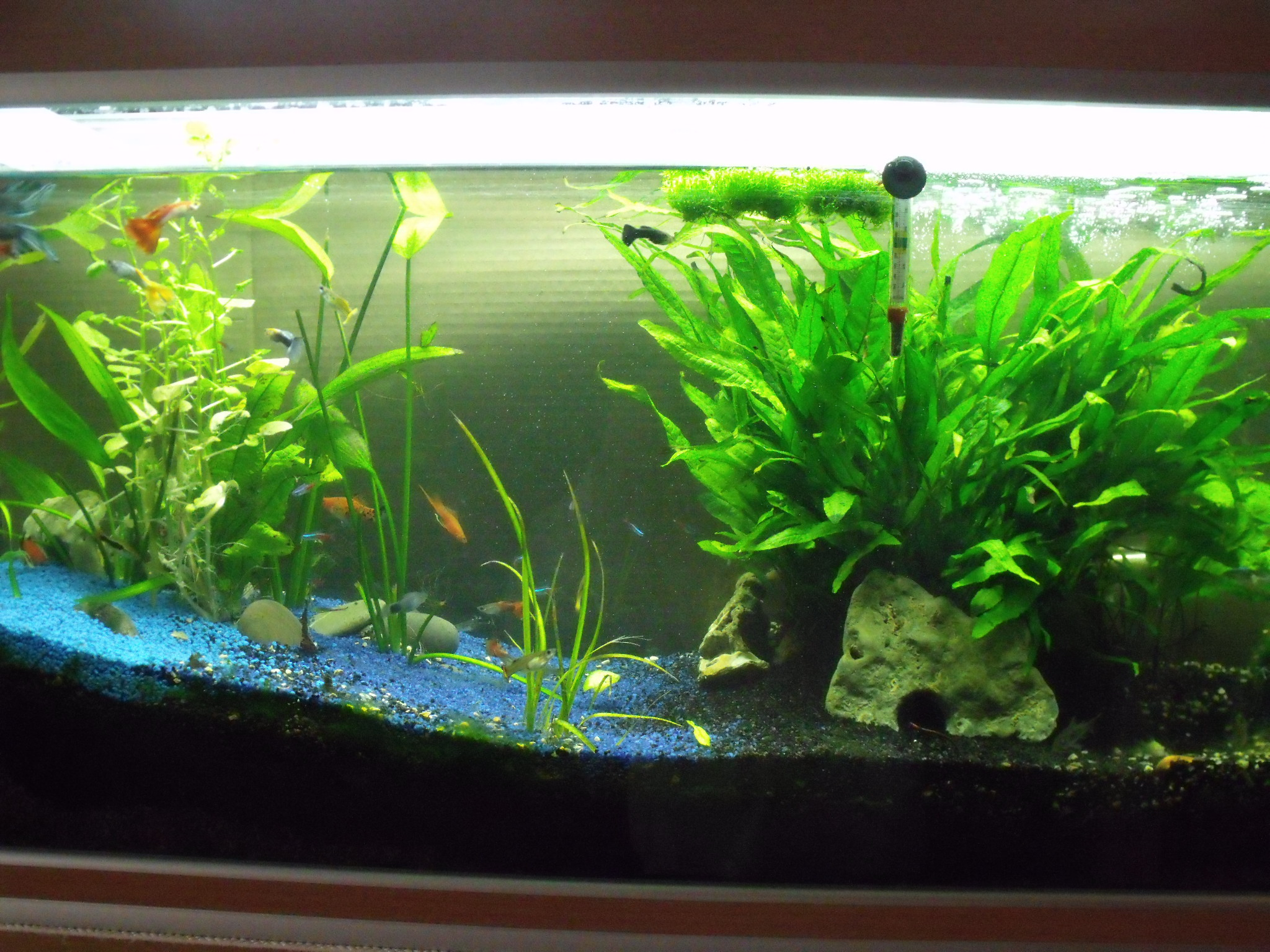 aquarium decoratif interieur